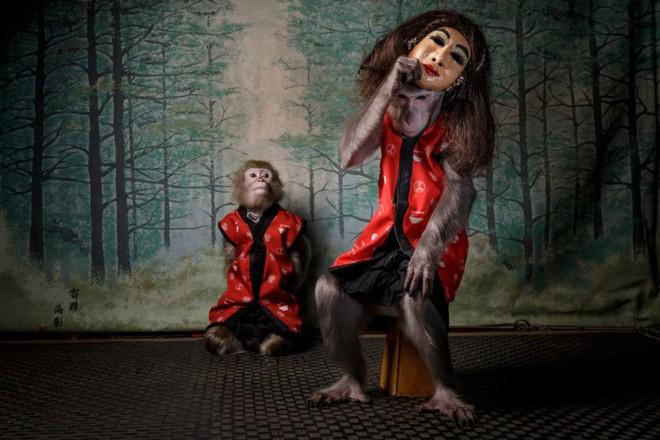 Ảnh Chú khỉ đeo mặt nạ người nhận giải Nhiếp ảnh gia thiên nhiên hoang dã của năm tại Châu Âu - Ảnh 1.