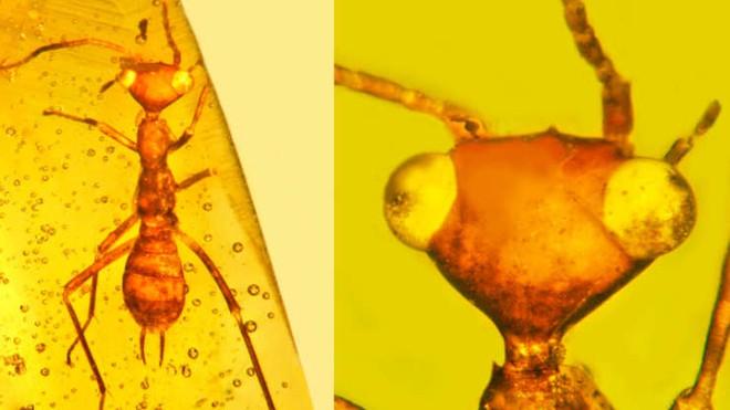 Những hóa thạch hổ phách kỳ lạ nhất từng được phát hiện - Ảnh 2.