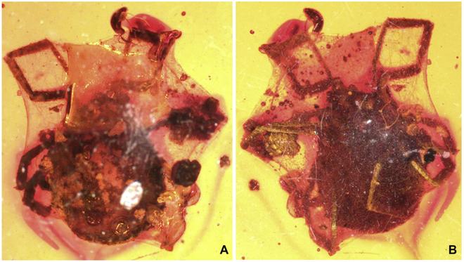Những hóa thạch hổ phách kỳ lạ nhất từng được phát hiện - Ảnh 4.