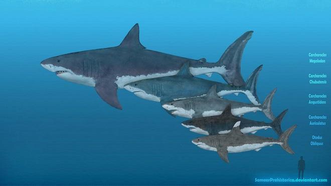 Ăn thịt anh em trong bụng mẹ: Bí quyết giúp quái vật biển Megalodon có kích cỡ khổng lồ - Ảnh 1.