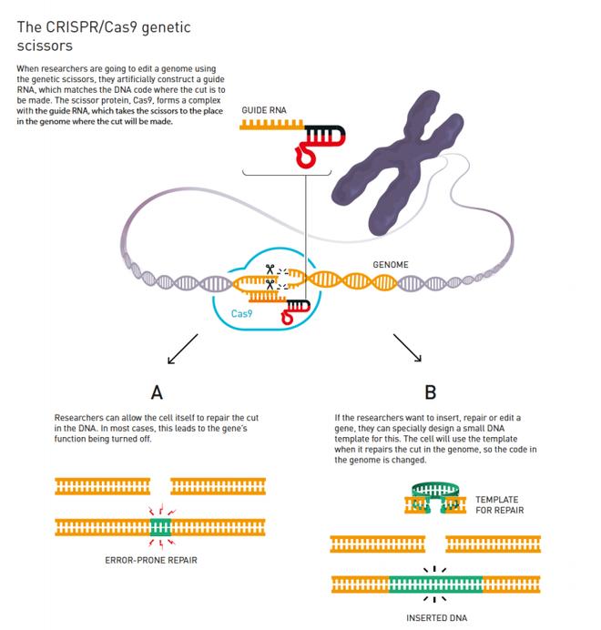 Nobel Hóa học 2020 gọi tên hai nữ khoa học gia phát minh công nghệ chỉnh sửa gen CRISPR/Cas9 - Ảnh 3.