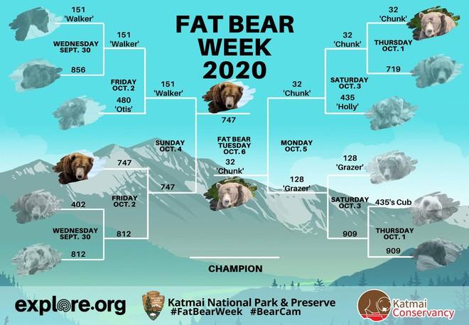 Đây là nhà vô địch rửng mỡ của cuộc thi Tuần lễ Gấu béo năm 2020 - Ảnh 3.