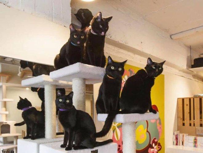 Nekobiyaka - Quán cà phê mèo đen độc nhất vô nhị trên thế giới - Ảnh 3.