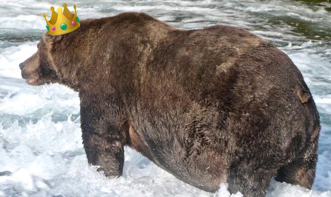 Đây là nhà vô địch rửng mỡ của cuộc thi Tuần lễ Gấu béo năm 2020 - Ảnh 1.