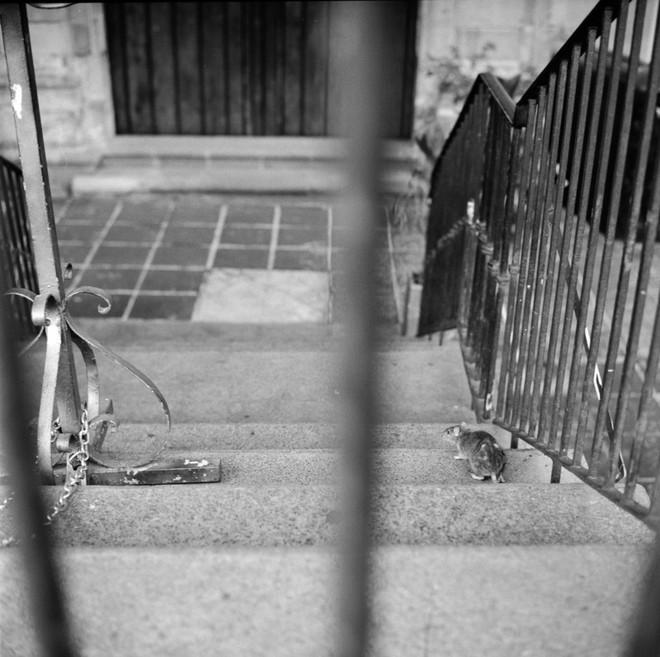 Cách chụp ảnh như nữ nhiếp ảnh gia đường phố Vivian Maier - Ảnh 22.