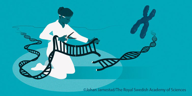 Một kỹ sư CRISPR giải thích tại sao công nghệ chỉnh sửa gen này xứng đáng đoạt giải Nobel Hóa học năm nay - Ảnh 2.