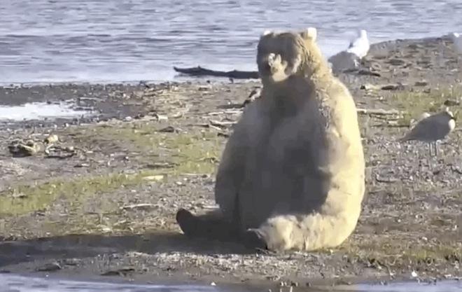 Đây là nhà vô địch rửng mỡ của cuộc thi Tuần lễ Gấu béo năm 2020 - Ảnh 4.