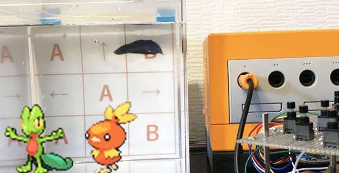 4 chú cá cảnh phá đảo Pokémon sau gần 3.200 giờ chơi, phát hiện cả bug game mà chưa ai tìm ra trong suốt 18 năm qua - Ảnh 2.