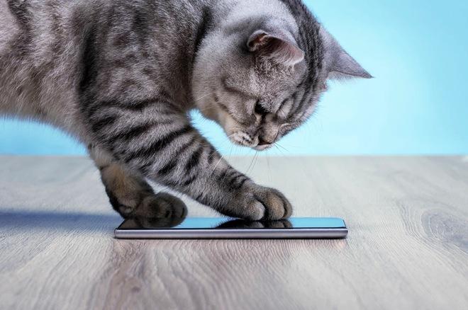 Cựu kỹ sư Amazon phát triển ứng dụng dịch tiếng mèo kêu sang ngôn ngữ con người hiểu được - Ảnh 1.