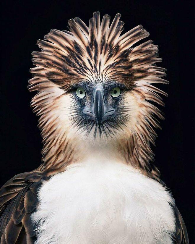 Chân dung các loài chim quý hiếm, tuy đơn giản nhưng lại tuyệt đẹp - Ảnh 9.