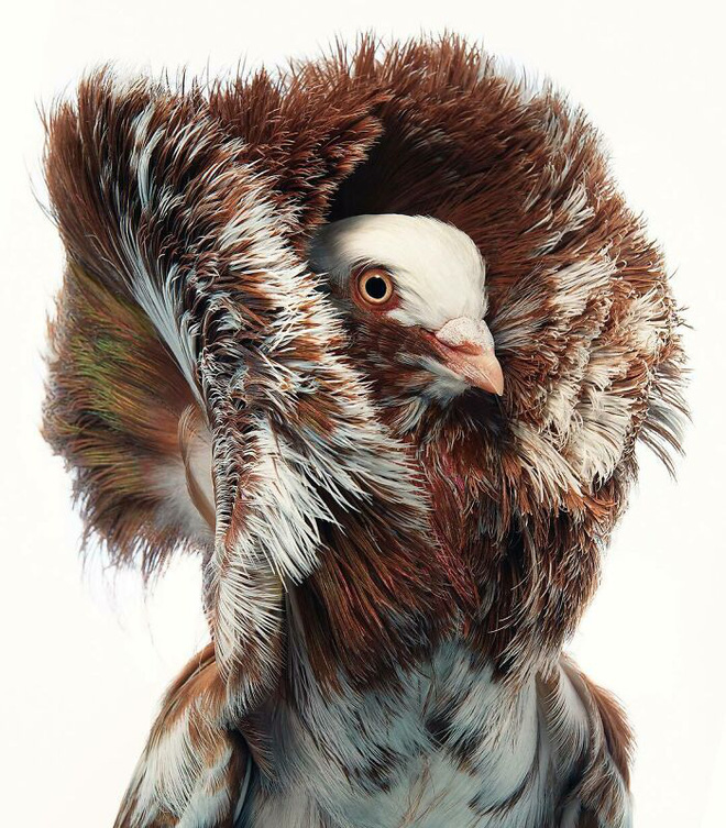 Chân dung các loài chim quý hiếm, tuy đơn giản nhưng lại tuyệt đẹp - Ảnh 16.