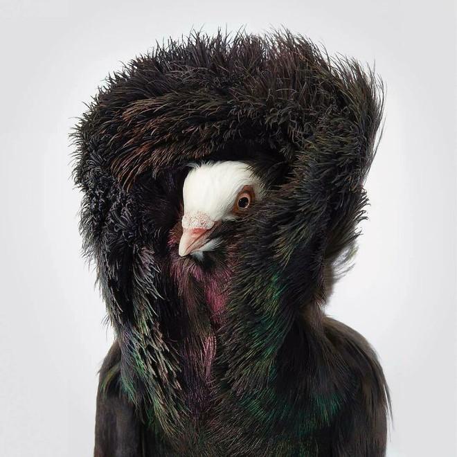 Chân dung các loài chim quý hiếm, tuy đơn giản nhưng lại tuyệt đẹp - Ảnh 10.