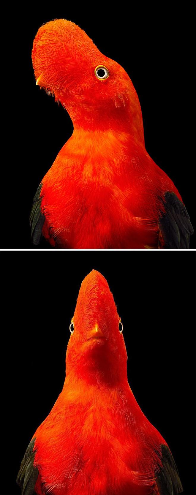 Chân dung các loài chim quý hiếm, tuy đơn giản nhưng lại tuyệt đẹp - Ảnh 18.