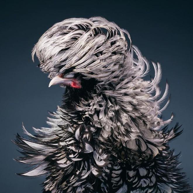 Chân dung các loài chim quý hiếm, tuy đơn giản nhưng lại tuyệt đẹp - Ảnh 23.