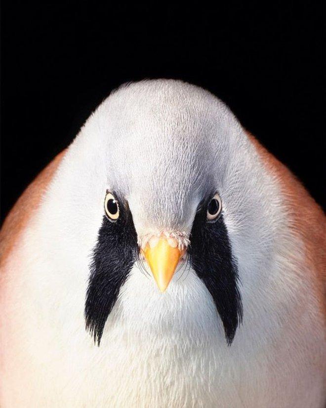 Chân dung các loài chim quý hiếm, tuy đơn giản nhưng lại tuyệt đẹp - Ảnh 22.