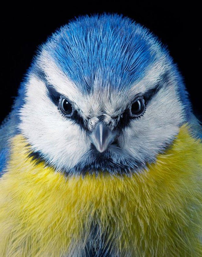 Chân dung các loài chim quý hiếm, tuy đơn giản nhưng lại tuyệt đẹp - Ảnh 2.