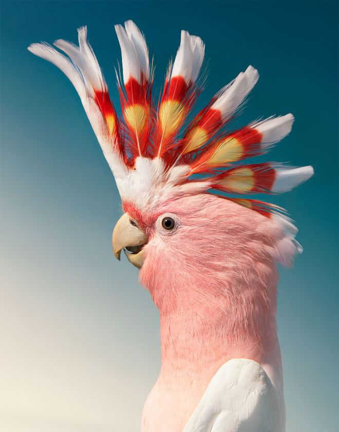 Chân dung các loài chim quý hiếm, tuy đơn giản nhưng lại tuyệt đẹp - Ảnh 6.