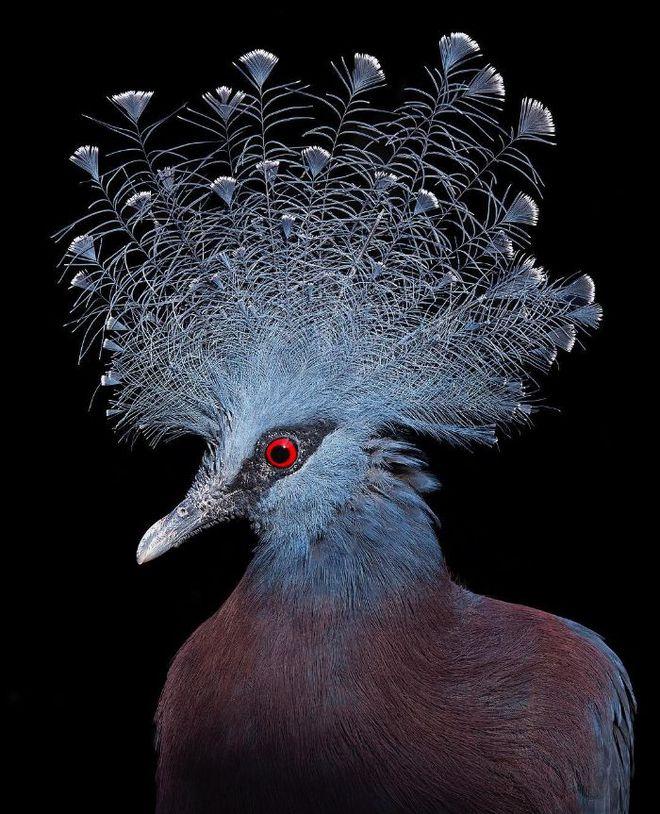 Chân dung các loài chim quý hiếm, tuy đơn giản nhưng lại tuyệt đẹp - Ảnh 12.