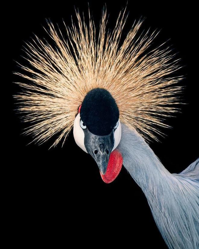 Chân dung các loài chim quý hiếm, tuy đơn giản nhưng lại tuyệt đẹp - Ảnh 15.