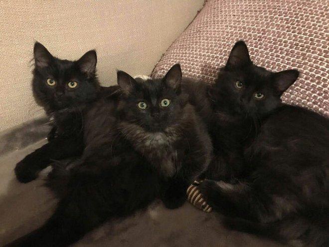 Người phụ nữ bị mèo hoang kéo cả nhà đến bắt đền vì trót dại cho mèo mẹ ăn - Ảnh 5.