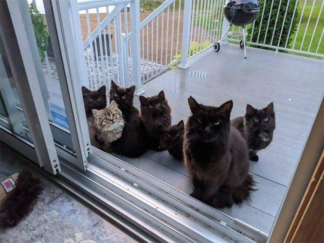 Người phụ nữ bị mèo hoang kéo cả nhà đến bắt đền vì trót dại cho mèo mẹ ăn - Ảnh 1.