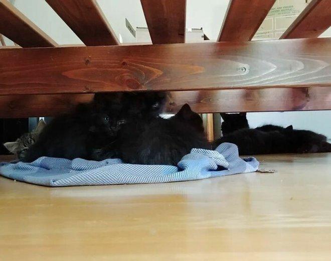 Người phụ nữ bị mèo hoang kéo cả nhà đến bắt đền vì trót dại cho mèo mẹ ăn - Ảnh 3.