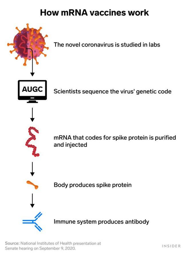 Đằng sau lý do tại sao vắc xin COVID-19 của Moderna có thể được thiết kế với thời gian kỷ lục: Chỉ 2 ngày - Ảnh 1.