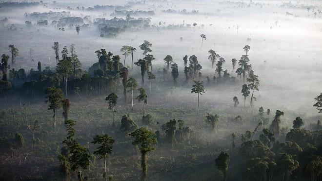 Trái Đất giờ đã có nhiều vật thể nhân tạo hơn tất thảy sinh vật sống - Ảnh 2.