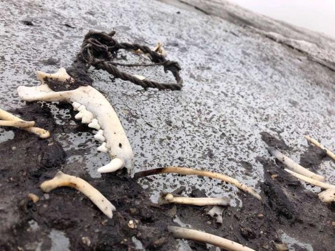 Điểm lại những khám phá khảo cổ học ấn tượng nhất năm 2020 - Ảnh 11.