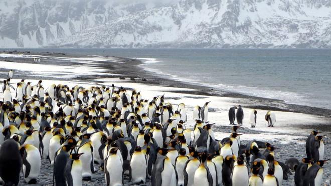 Rộng tới 4.200 km2, tảng băng trôi lớn nhất thế giới này sắp gây ra sự kiện đại thảm họa - Ảnh 2.