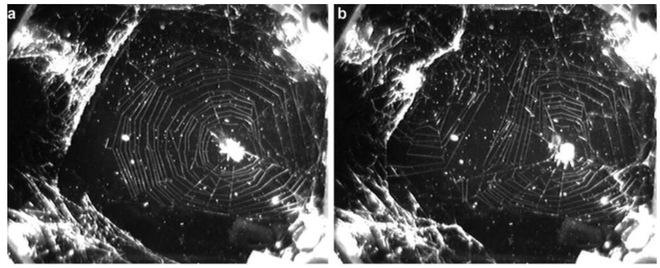 Cũng là mạng nhện, nhưng mạng nhện vũ trụ khác gì mạng nhện Trái Đất? - Ảnh 5.