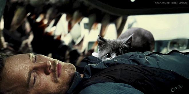Chết cười với chùm ảnh Công viên kỷ Jura nhưng khủng long được thay thế bằng mèo và chồn - Ảnh 11.