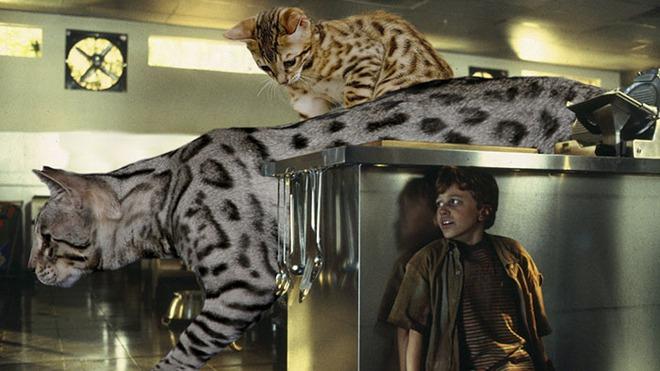 Chết cười với chùm ảnh Công viên kỷ Jura nhưng khủng long được thay thế bằng mèo và chồn - Ảnh 14.