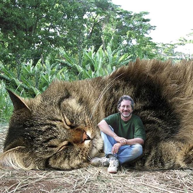 Chết cười với chùm ảnh Công viên kỷ Jura nhưng khủng long được thay thế bằng mèo và chồn - Ảnh 15.