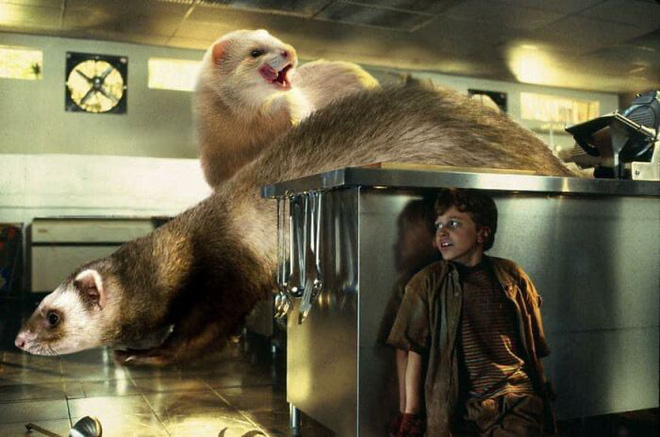 Chết cười với chùm ảnh Công viên kỷ Jura nhưng khủng long được thay thế bằng mèo và chồn - Ảnh 24.