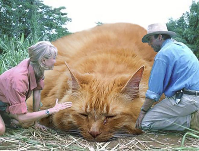 Chết cười với chùm ảnh Công viên kỷ Jura nhưng khủng long được thay thế bằng mèo và chồn - Ảnh 5.