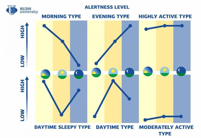 Không chỉ có chim sớm hay cú đêm, con người còn tới 4 kiểu đồng hồ sinh học kỳ lạ khác - Ảnh 2.