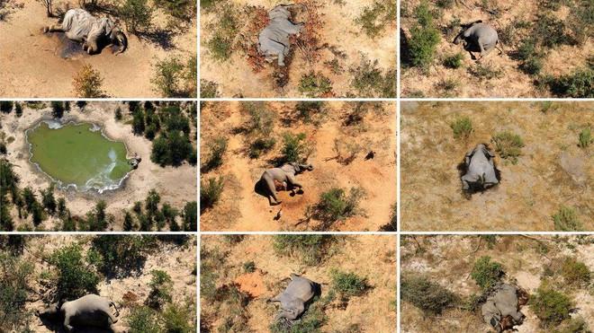 Tìm ra thủ phạm đã giết chết 330 con voi bên cạnh hồ nước - Ảnh 4.