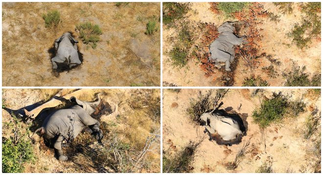 Tìm ra thủ phạm đã giết chết 330 con voi bên cạnh hồ nước - Ảnh 2.