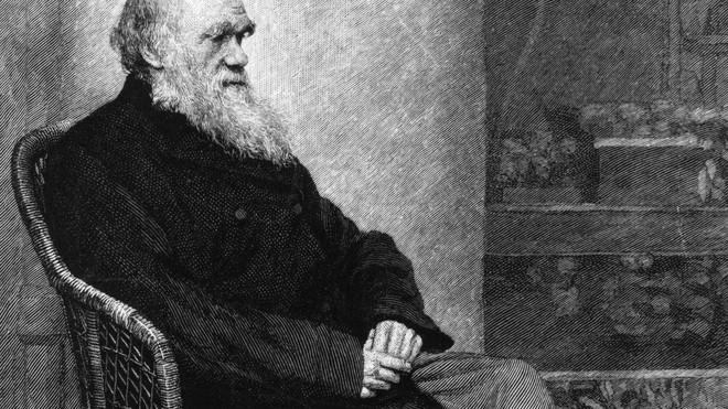 160 năm sau, các nhà khoa học thừa nhận Charles Darwin đã đúng về việc lý do tại sao côn trùng mất khả năng bay - Ảnh 1.