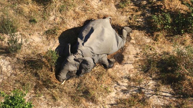 Tìm ra thủ phạm đã giết chết 330 con voi bên cạnh hồ nước - Ảnh 1.