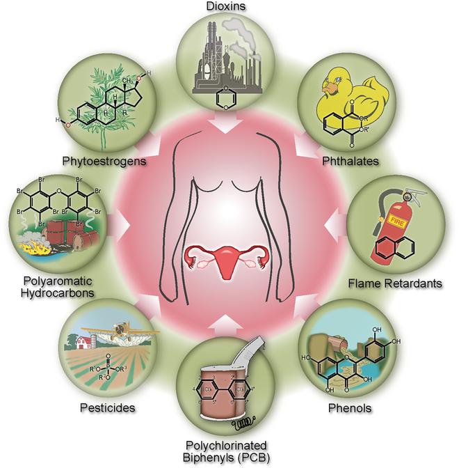 Nhựa chứa 144 hợp chất làm rối loạn hormone và chúng sẽ gây hại cho nhiều thế hệ - Ảnh 2.