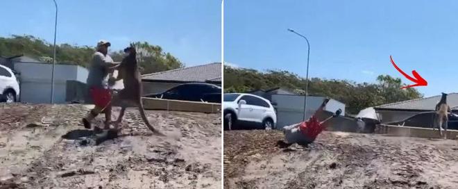 Úc: Bảo vệ con nhỏ, ông bố bị kangaroo hoang dã đá ngã lăn ra đất, gãy cả tay - Ảnh 2.