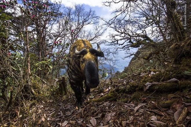 25 tác phẩm chung kết giải nhiếp ảnh quốc tế sẽ cho bạn thấy 7749 sắc thái của thế giới động vật: Tươi đẹp, kỳ lạ và rất khắc nghiệt - Ảnh 1.