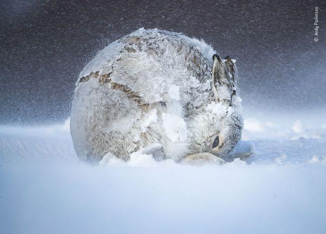 25 tác phẩm chung kết giải nhiếp ảnh quốc tế sẽ cho bạn thấy 7749 sắc thái của thế giới động vật: Tươi đẹp, kỳ lạ và rất khắc nghiệt - Ảnh 11.