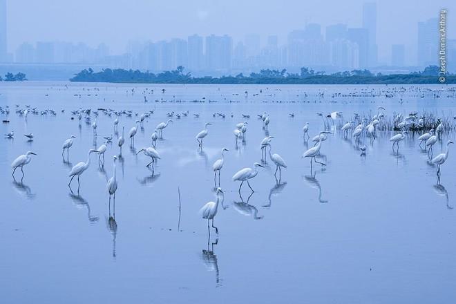 25 tác phẩm chung kết giải nhiếp ảnh quốc tế sẽ cho bạn thấy 7749 sắc thái của thế giới động vật: Tươi đẹp, kỳ lạ và rất khắc nghiệt - Ảnh 12.