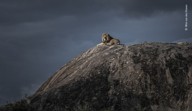 25 tác phẩm chung kết giải nhiếp ảnh quốc tế sẽ cho bạn thấy 7749 sắc thái của thế giới động vật: Tươi đẹp, kỳ lạ và rất khắc nghiệt - Ảnh 16.