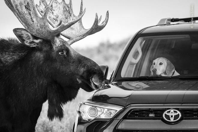 25 tác phẩm chung kết giải nhiếp ảnh quốc tế sẽ cho bạn thấy 7749 sắc thái của thế giới động vật: Tươi đẹp, kỳ lạ và rất khắc nghiệt - Ảnh 17.