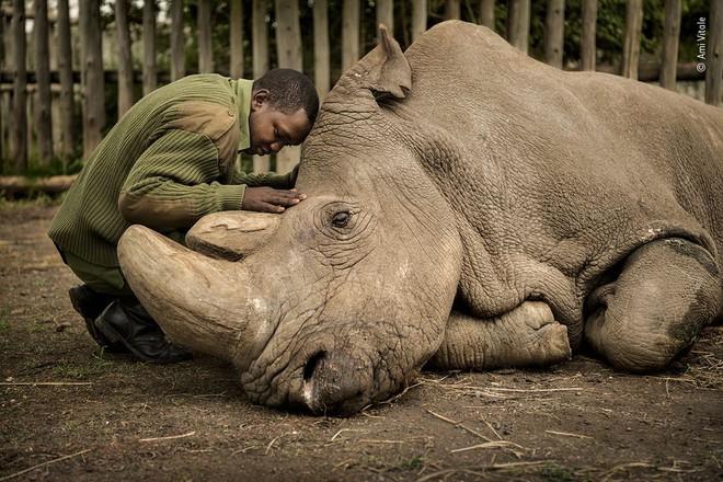 25 tác phẩm chung kết giải nhiếp ảnh quốc tế sẽ cho bạn thấy 7749 sắc thái của thế giới động vật: Tươi đẹp, kỳ lạ và rất khắc nghiệt - Ảnh 23.