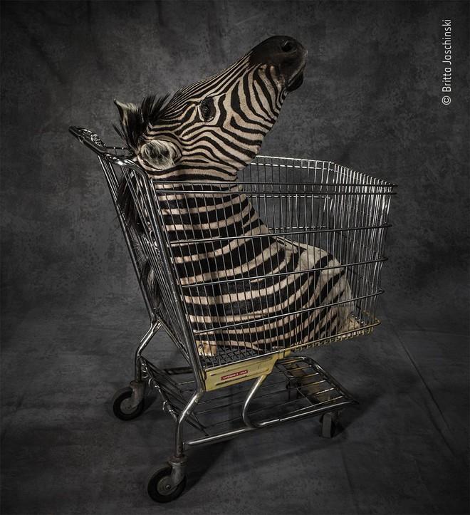 25 tác phẩm chung kết giải nhiếp ảnh quốc tế sẽ cho bạn thấy 7749 sắc thái của thế giới động vật: Tươi đẹp, kỳ lạ và rất khắc nghiệt - Ảnh 24.
